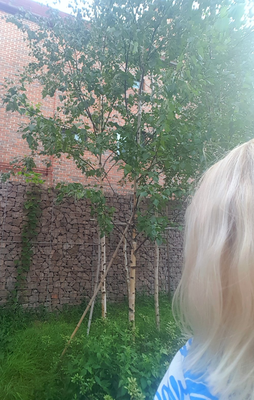 Finland? Nope. Can you believe there were birches just outside the house? BIRCHES in Seoul. Wow.