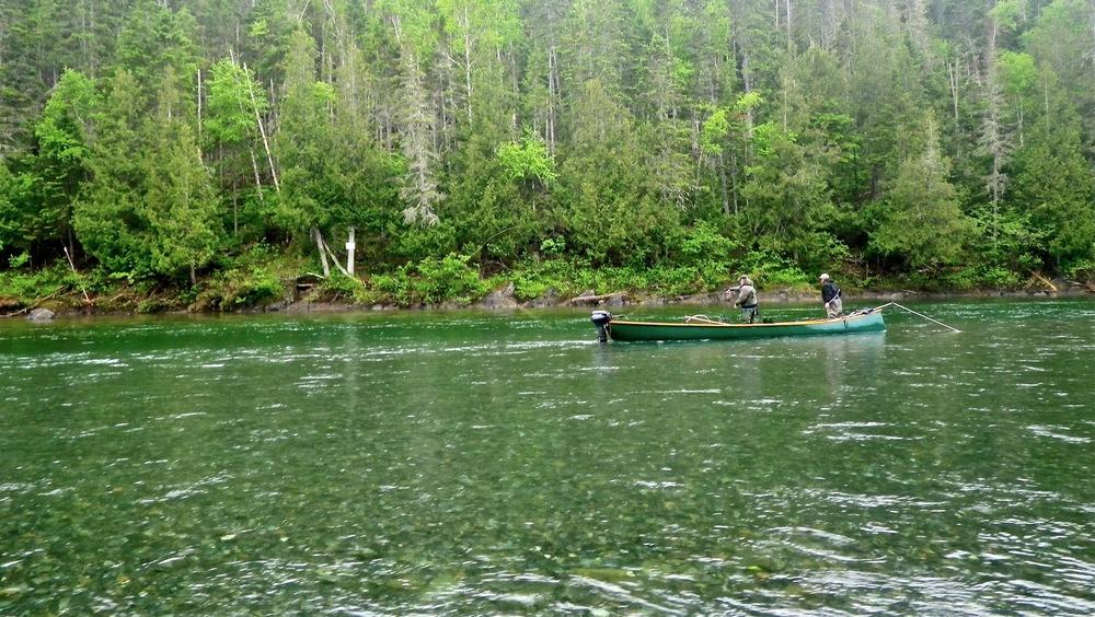 À la recherche des premiers saumons de la saison, où qu'il soient.