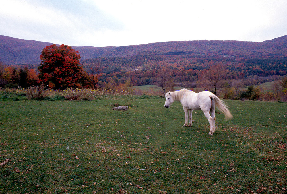 white-horse-in-vermont-copy.jpg