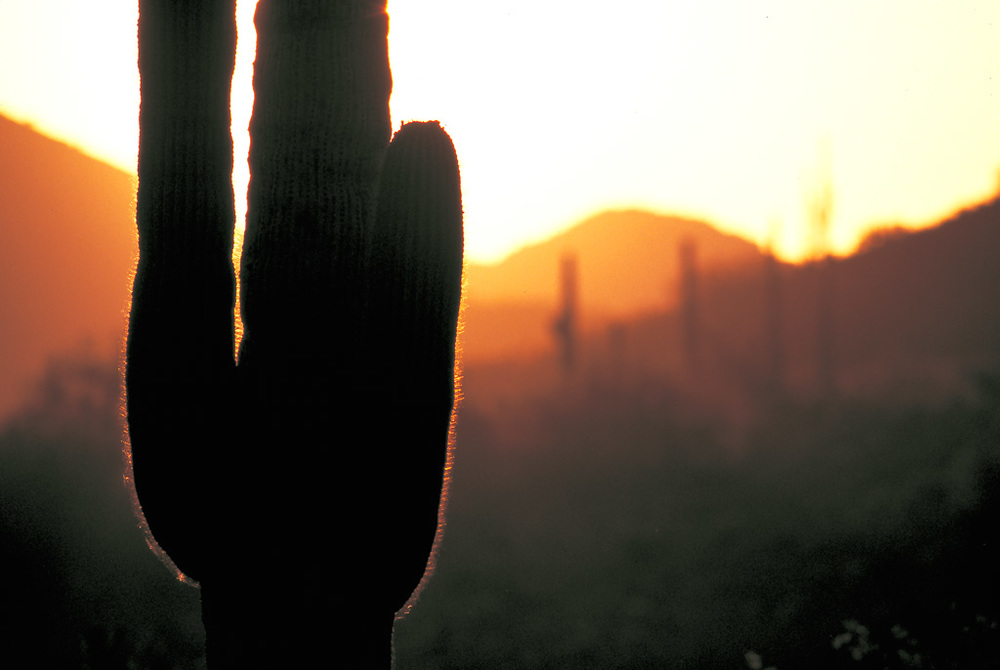SUNSET-CACTUS-copy----.jpg