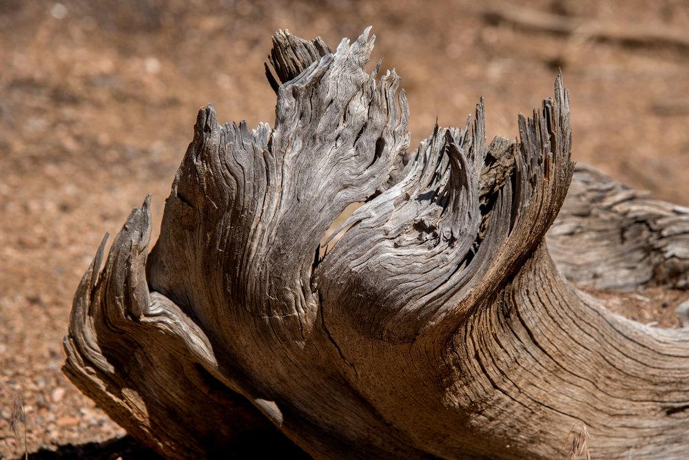 woodenFlame-8522.jpg