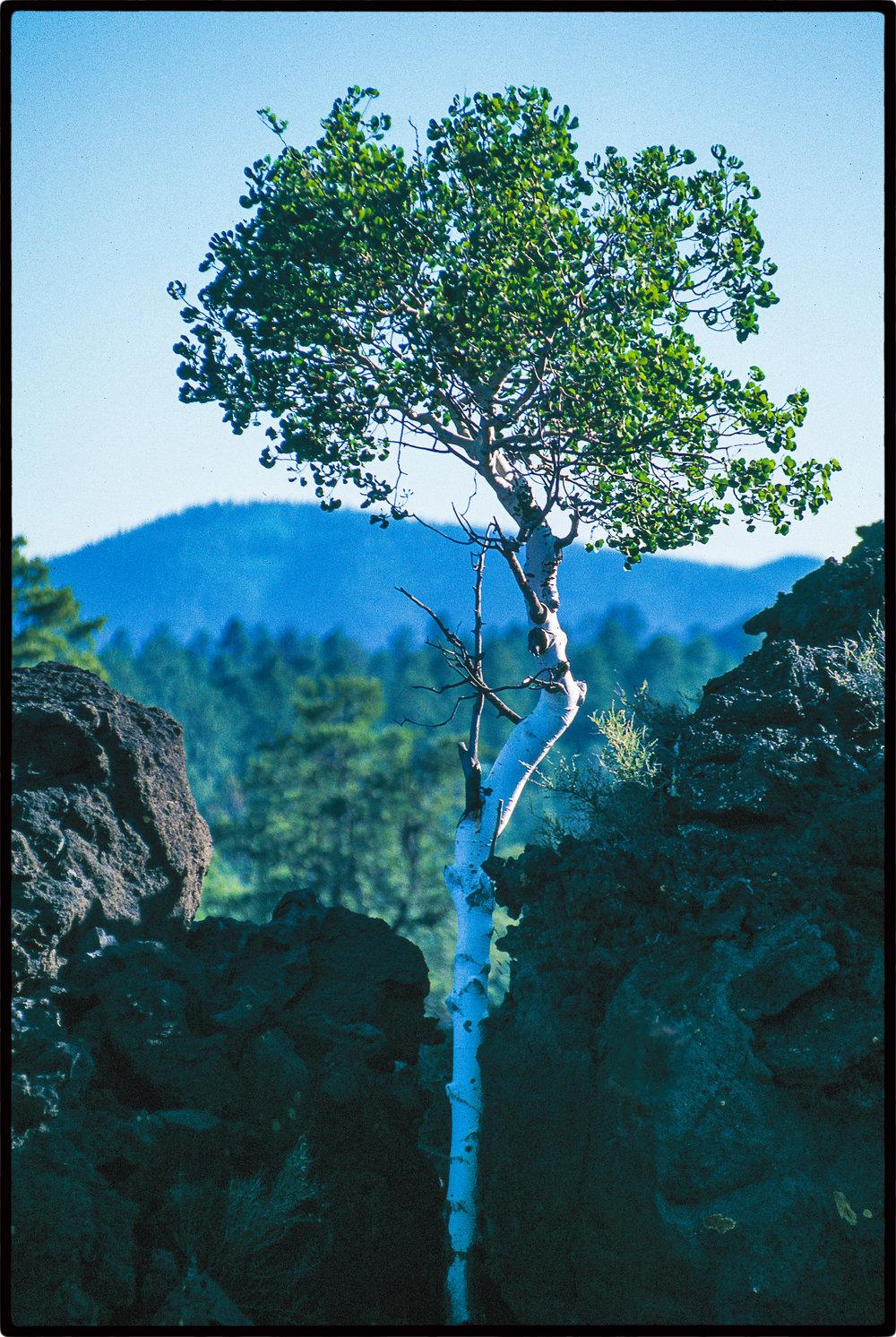 TREE----3---copy-copy.jpg