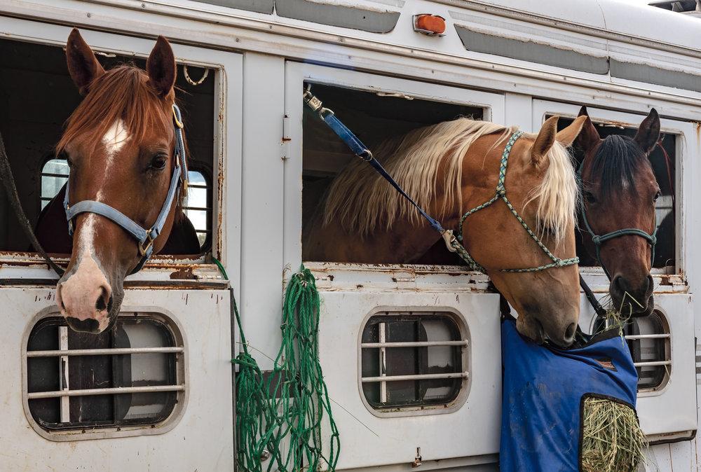 three-amigo-horses.jpg