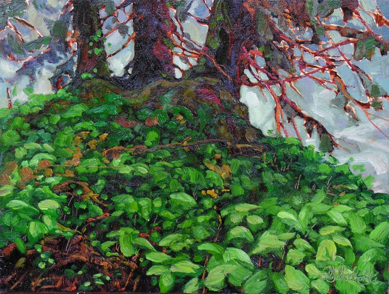 "Tongas Forest 12"" x 16"" oil on board SOLD"