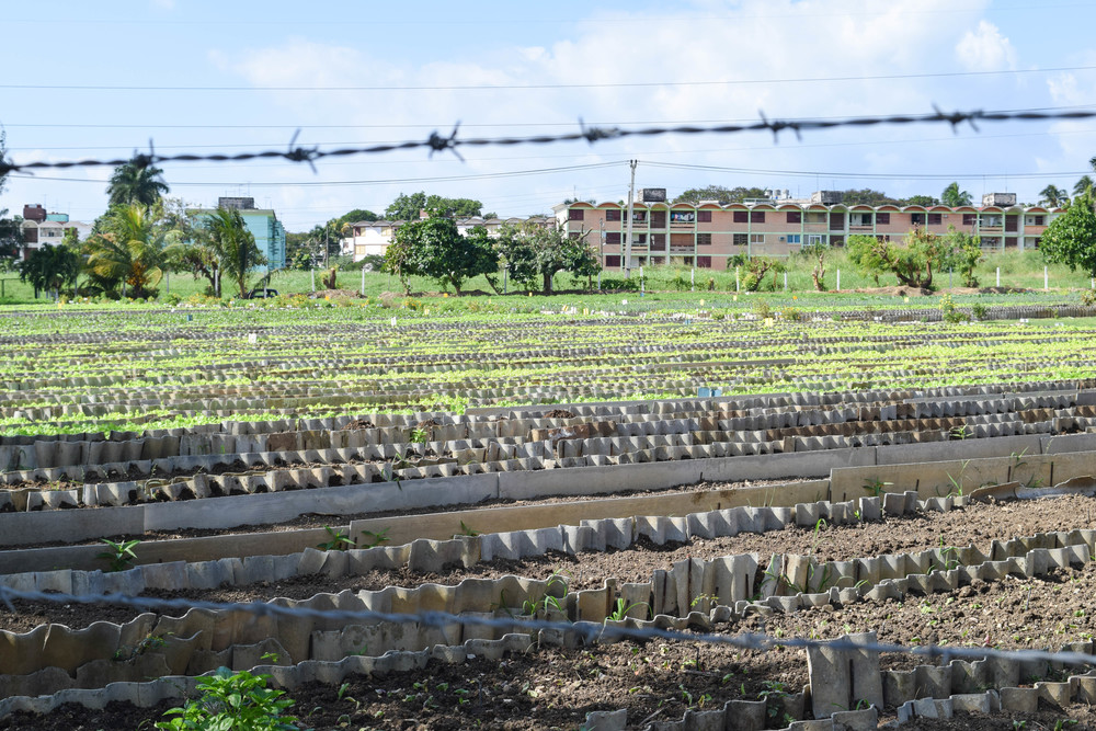 Urban Farm in La Habana