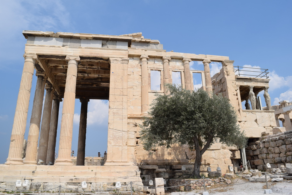The Erechtheion and its olive tree