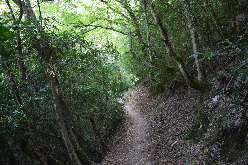 A shady stretch of trail at Matka Canyon