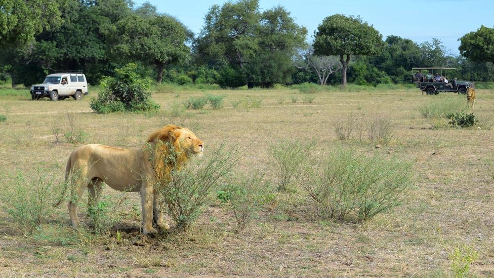 SLNP Lions
