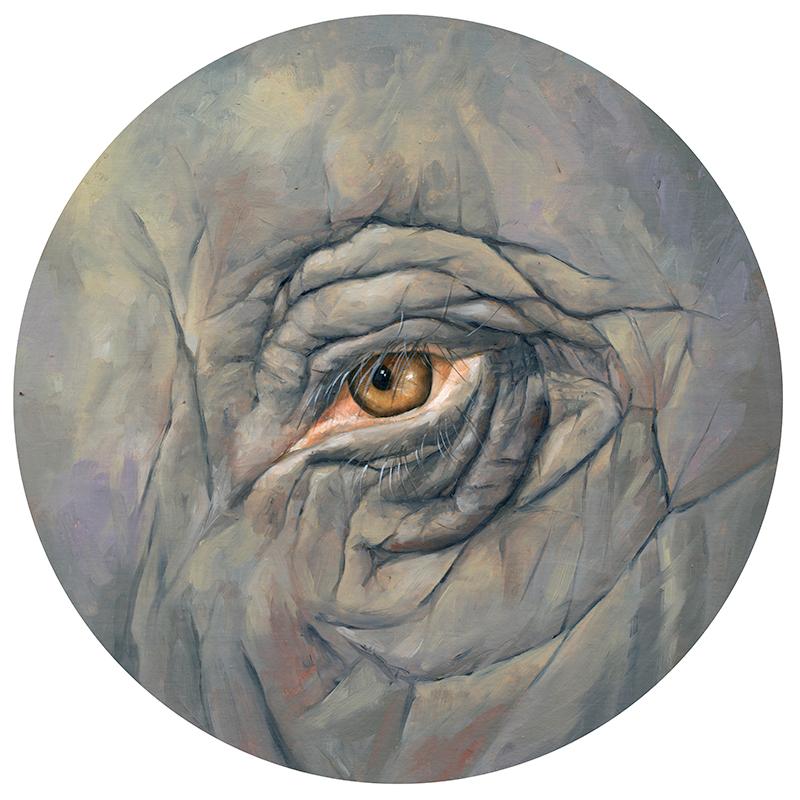 Kornacki_Elephant-Eye.jpg