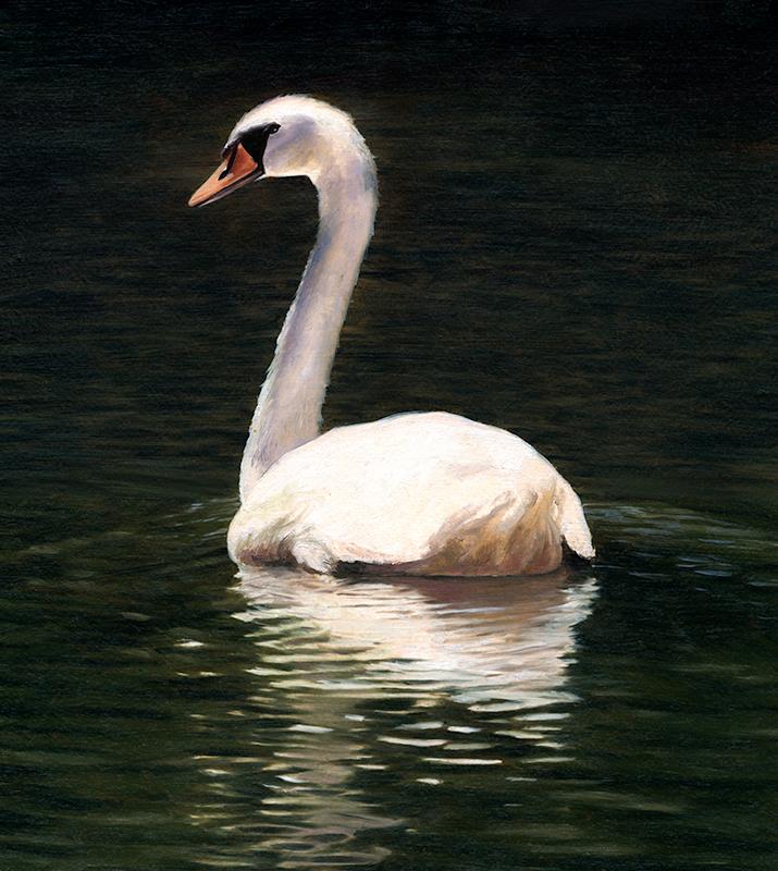 Kornacki_Swan