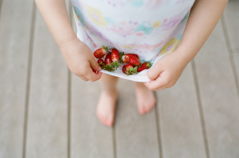 strawberry picking | DC family and film photographer | Yasmina Cowan Photography