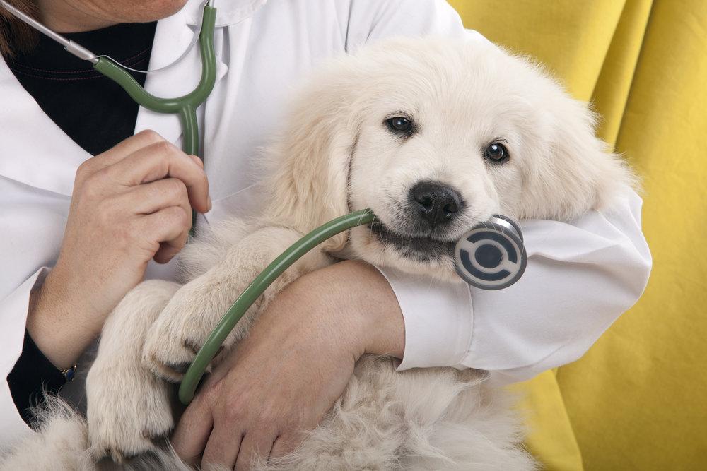Puppy at the vet.jpg
