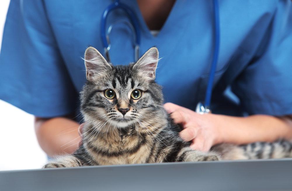 Cat at the vet.jpg