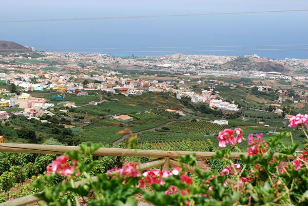View of the vines in La Orotava, the valley in Tenerife, Canary Islands where Suertes del Marqués is produced. (Photo courtesy of Suertes del Marqués).