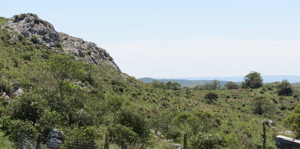 View of the Atlantic Ocean from Vinedo de los Vientos' newest vineyard