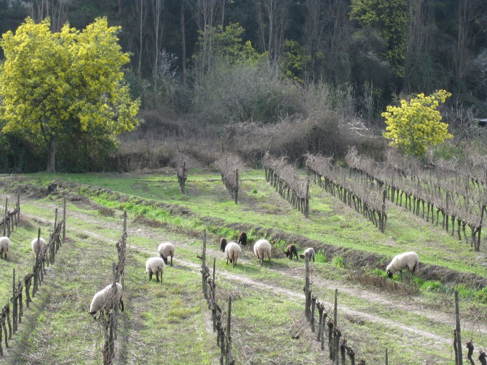 AltaCima - view from winery - cheeps.JPG