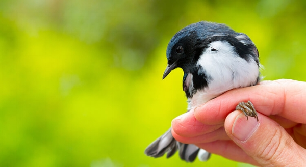 bird in the hand color.jpg