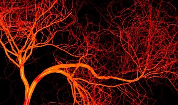 BloodVessels_0.jpg