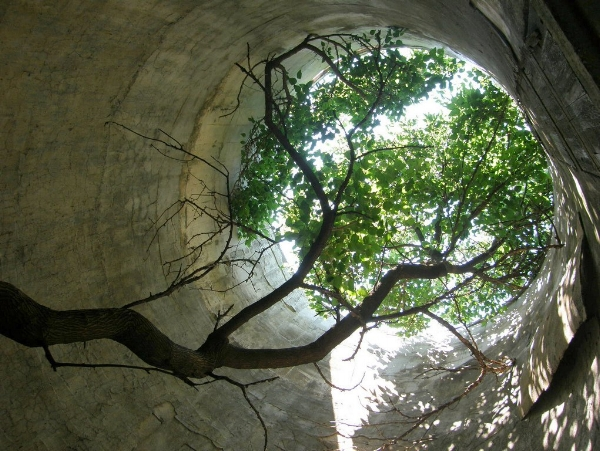 treesilo2.jpg