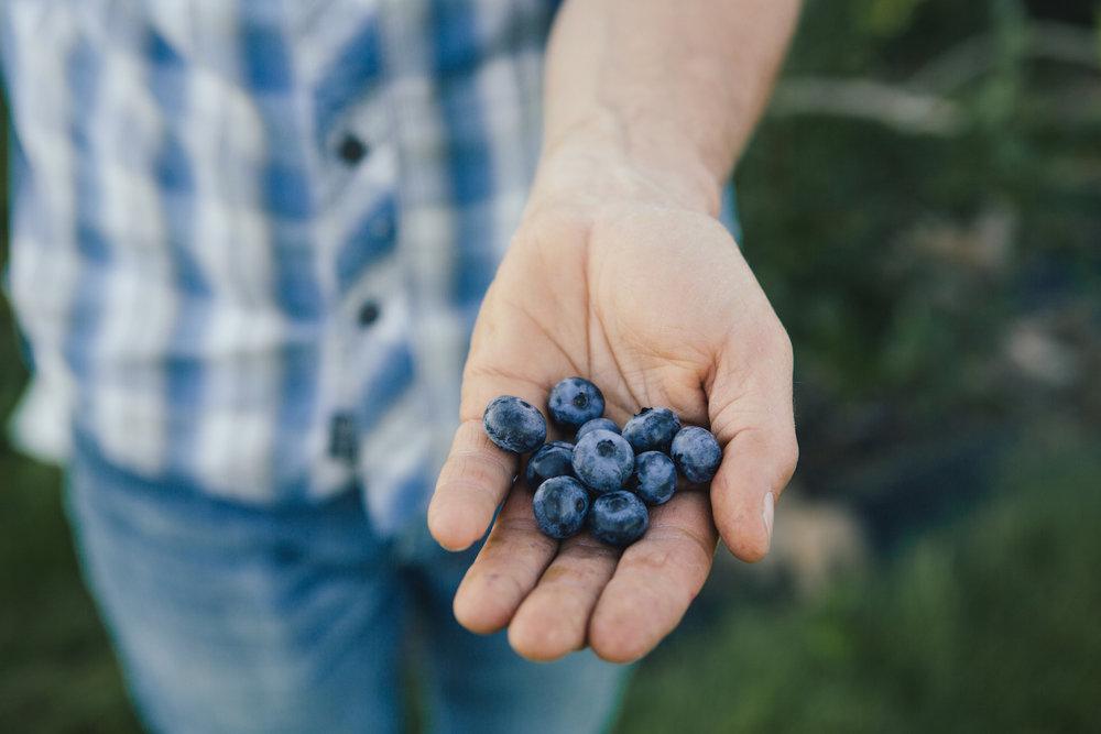 Adams Berry Farm Organic Blueberries