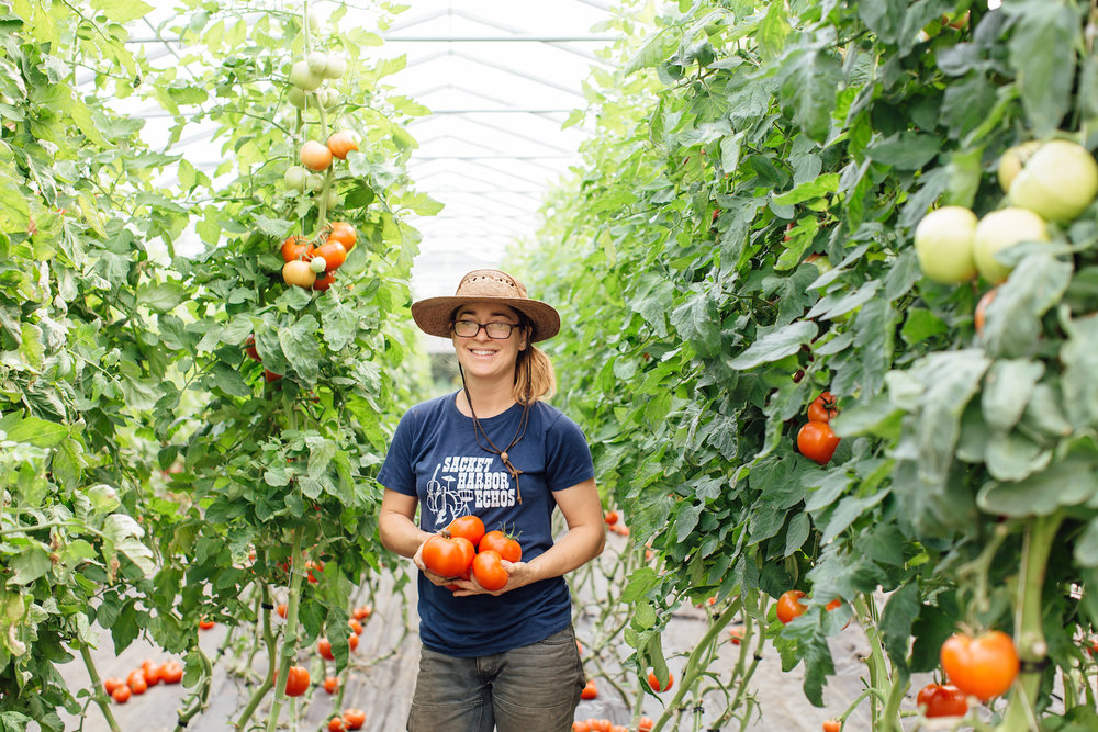 Greenhouse Tomatoes at Intervale Community Farm