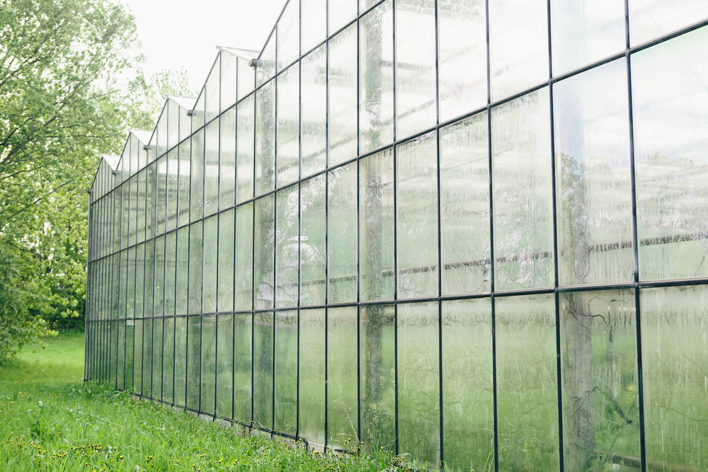 Miskells Premium Organics Greenhouse