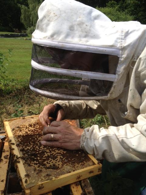 bill hives