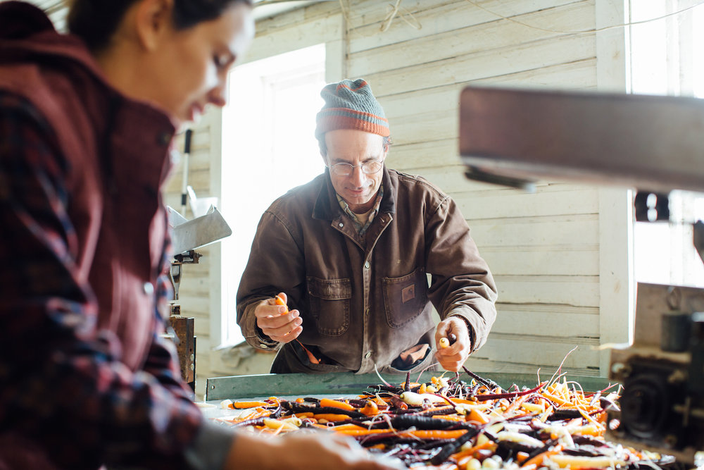 Owner David Marchant and Sam Rothberg sort organic rainbow carrots at River Berry Farm