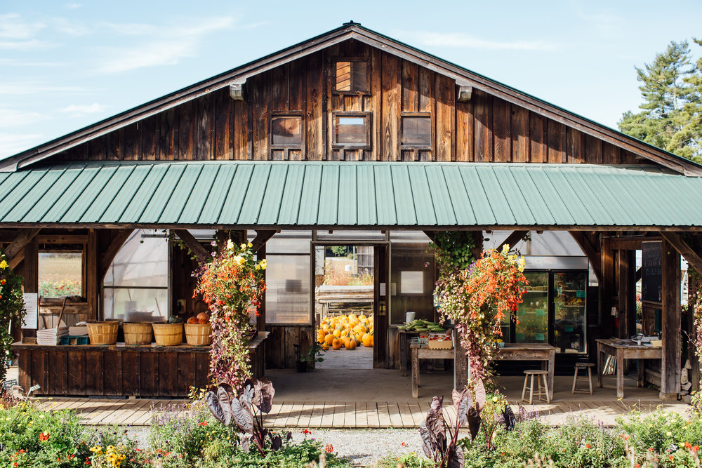 The River Berry Farm farm stand in full color in fall. River Berry Farm is located on the Lamoille River in Fairfax, VT. Owner David Marchant and his family have been working with the Intervale Food Hub since our start 10 years ago!