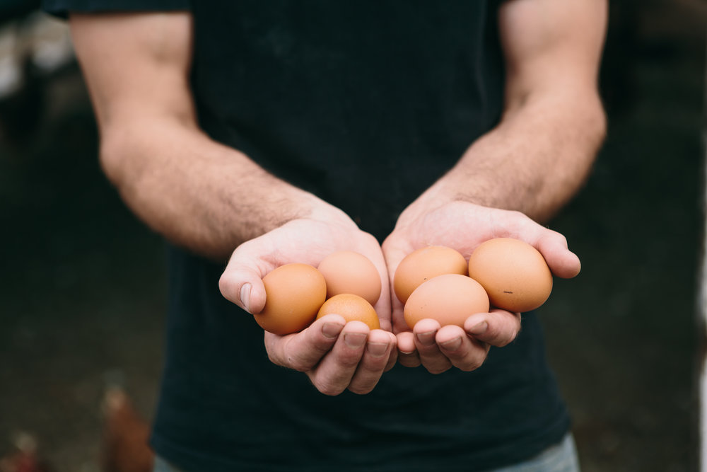 Besteyfield Farm Eggs