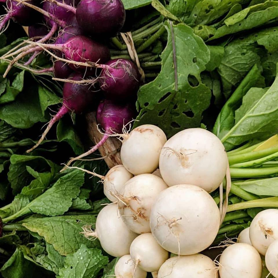Turnips and Radishes.jpg