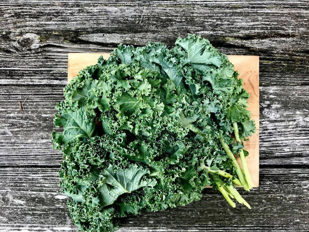 Green Curly Kale