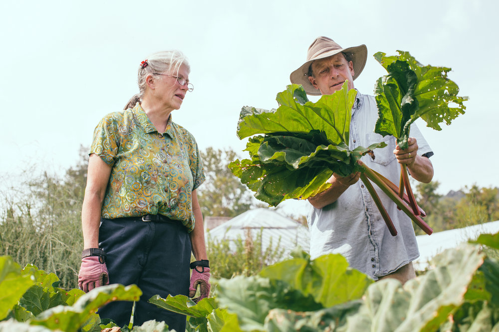 Nancy and John Hayden harvesting organic rhubarb at The Farm Between in Jeffersonville, VT