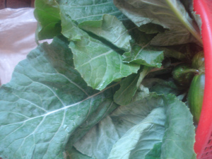 ev-cucumber-1.jpg