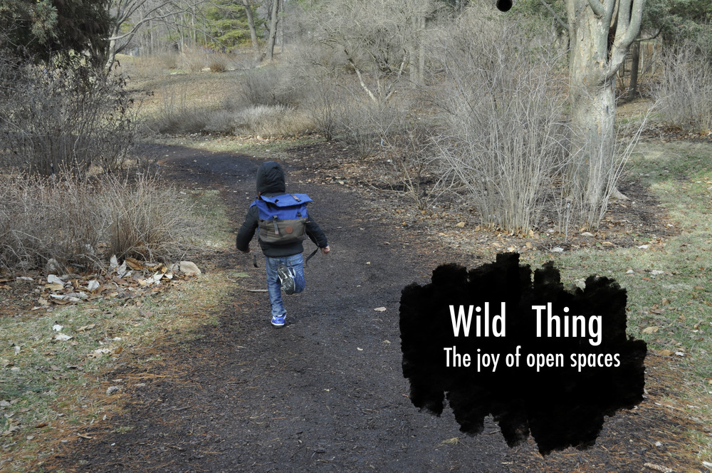 WildThingTitlePage.jpg