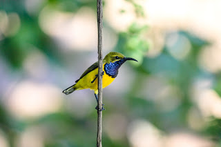 6b3cf-06-sunbird