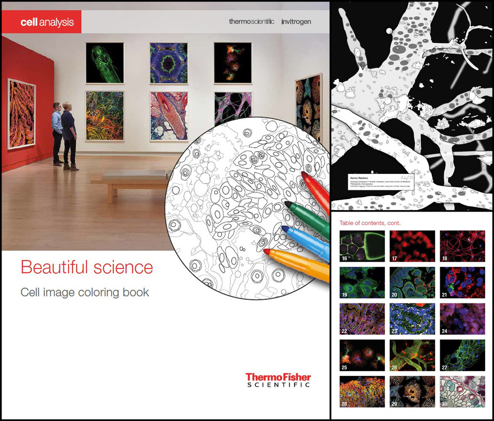 A selected winner for Thermo Fisher's beautiful science contest