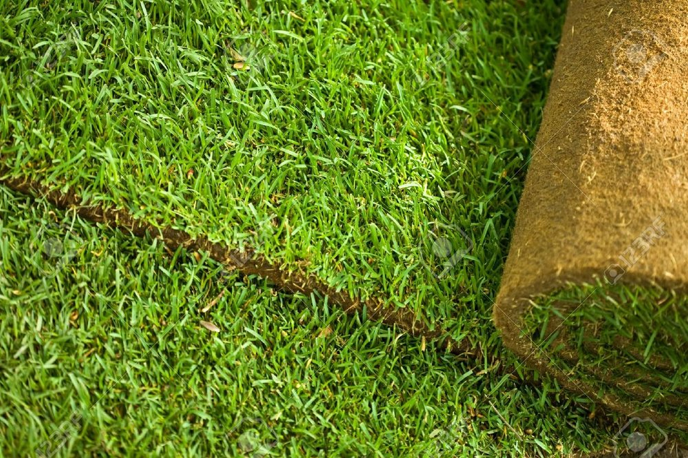 7022747-Green-turf-grass-roll-closeup-and-background-Stock-Photo-sod.jpg