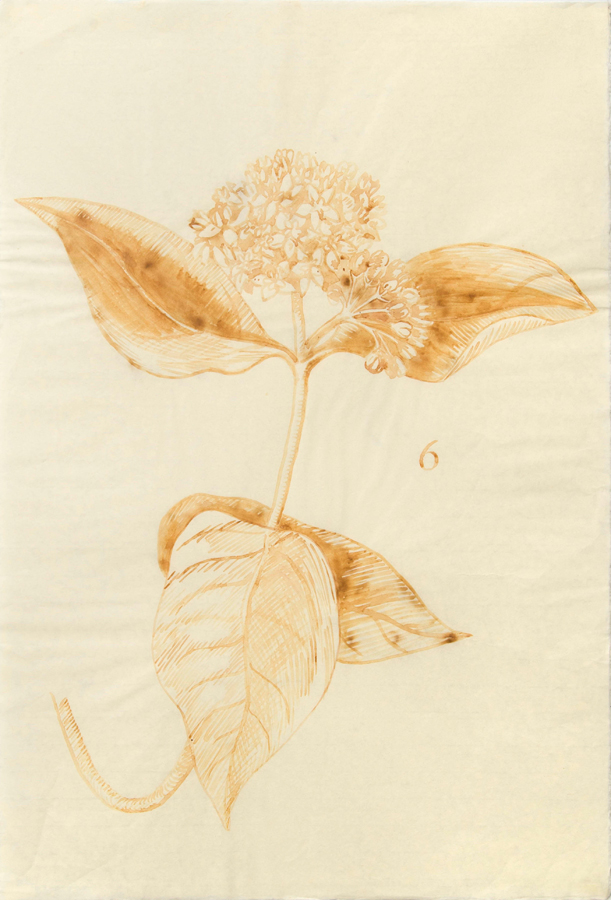 "Milkweed  ©2002 Milk on Paper 39"" x  26"""