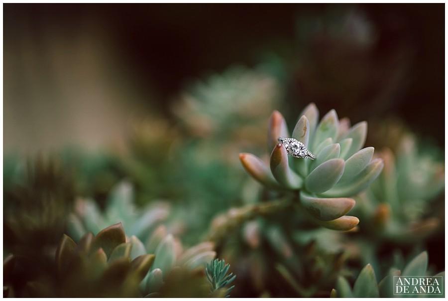 Central coast wedding Photographer__0007.jpg