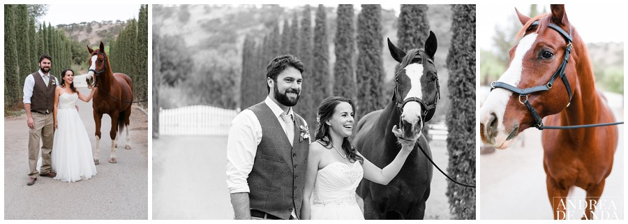 This beauty right here is Mozart and he loves pictures with Brides and Grooms :)
