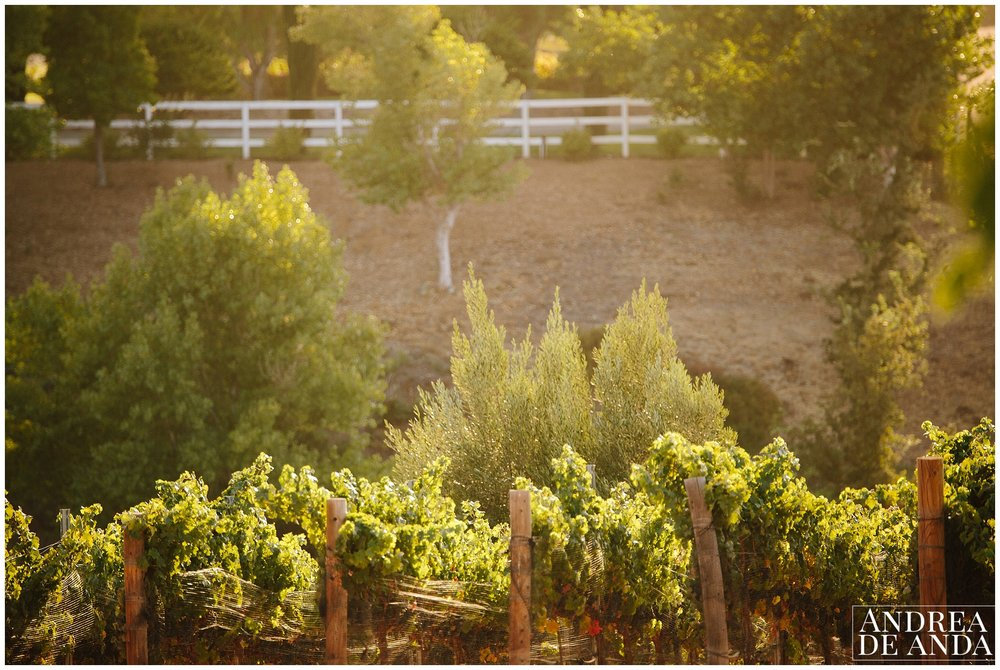 Santa Ynez Valley back yard wedding_Andrea de Anda Photography__0050.jpg