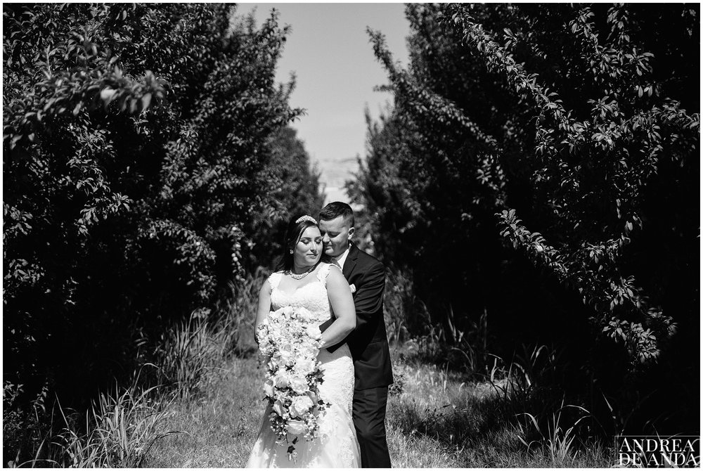Bride and Groom creative portraits in the venue's apricot field. Leading lines towards the bride and groom