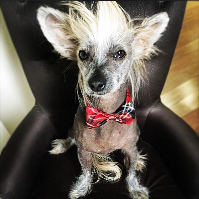 Colin has his own Instagram  account & is taking the dog modelling scene by storm