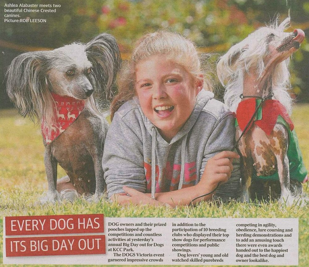 Even though No Hairs Ark wasn't mentioned, we're pretty rapt to see Holly decked out with her Whippet and Moo in print