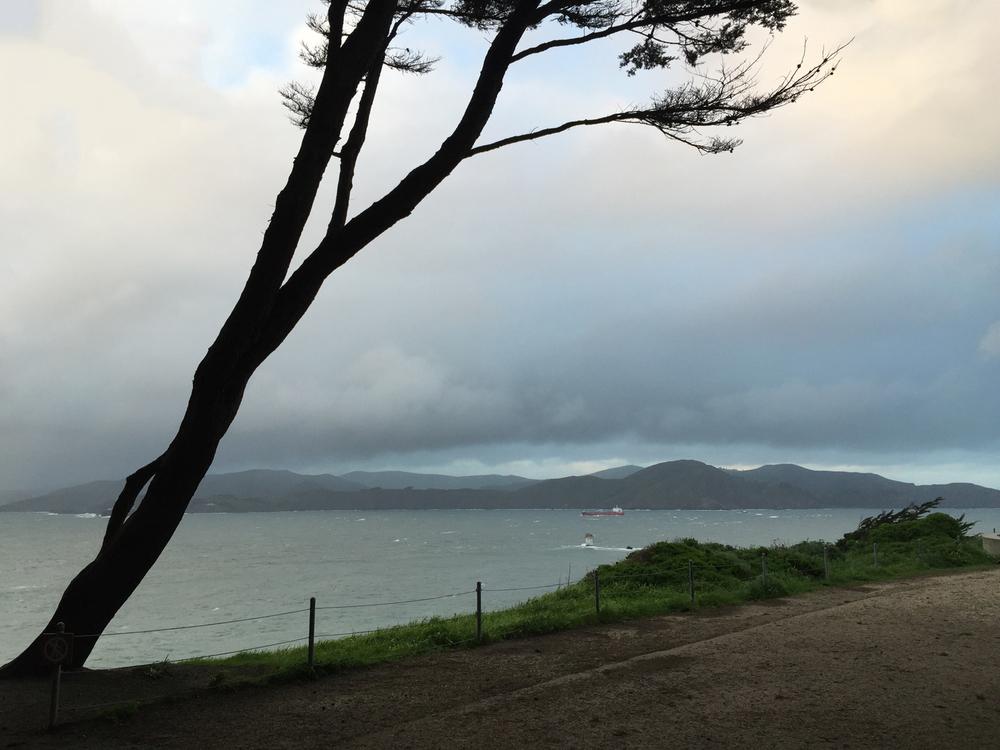 Coastal Trail  5:57 p.m. Sneaking a walk in between rains.