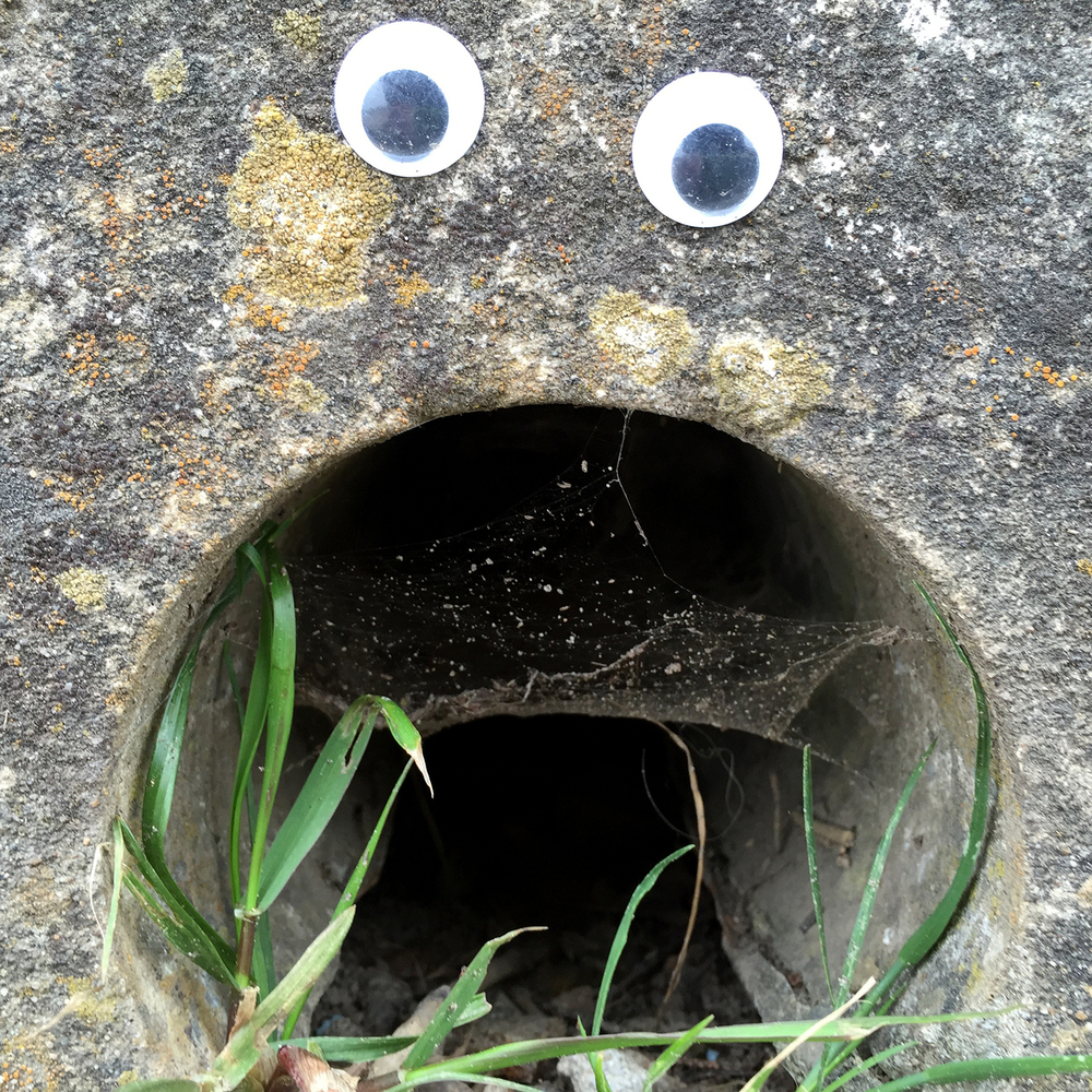 Encountered on The Coastal Trail of all places. (Not my googly eyes.)