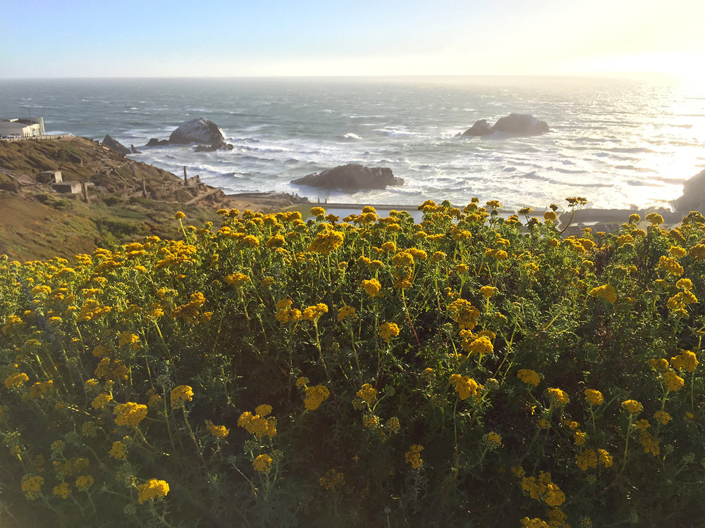 Above the Sutro Baths   7:42 pm