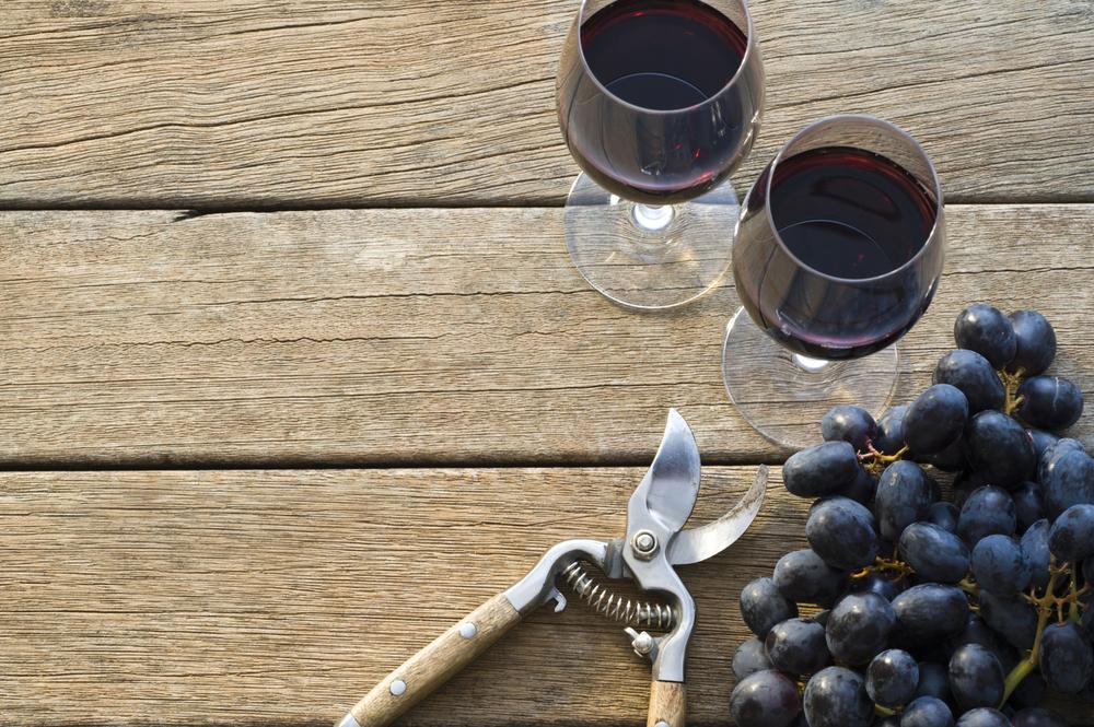 wine-experience.jpg