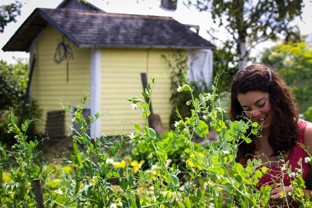 Caitlin plucking peas in the garden
